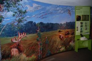 A habitat mural at Elk Island National Park in Saskatchewan sets the scene for other exhibits in the Visitor Center.