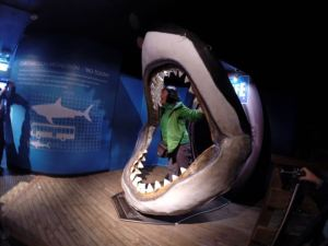 Sharks are always part of the attraction at a marine aquarium.