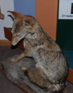 "Making a stuffed animal ""touchable"" usually results in degradation of the skin and fur with some danger from arsenic if its an older live mount."